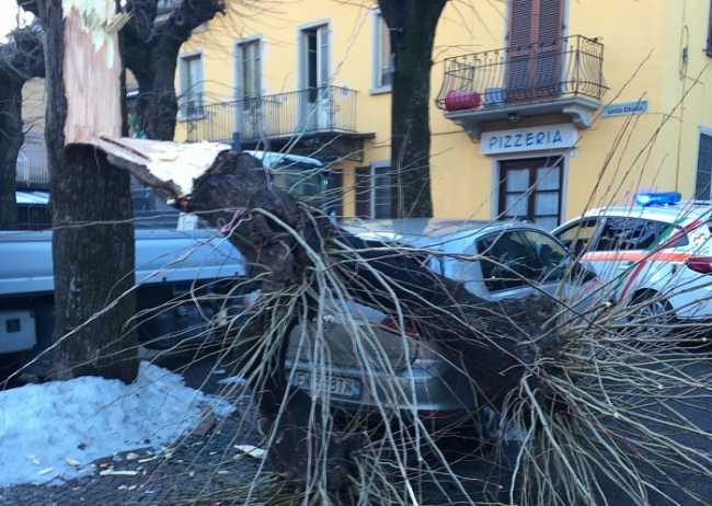 albero crusinallo