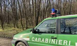 carabinieri forestale auto lato