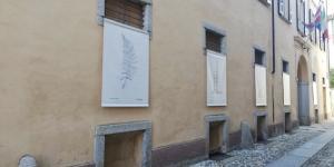 herbarium_3.jpeg